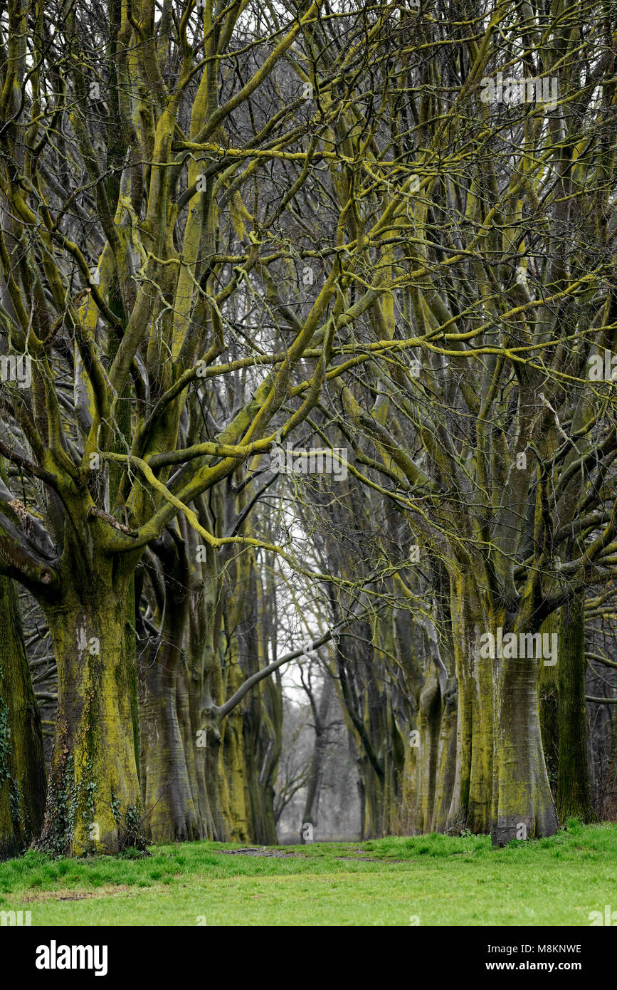 Trees path in the woods Stock Photo