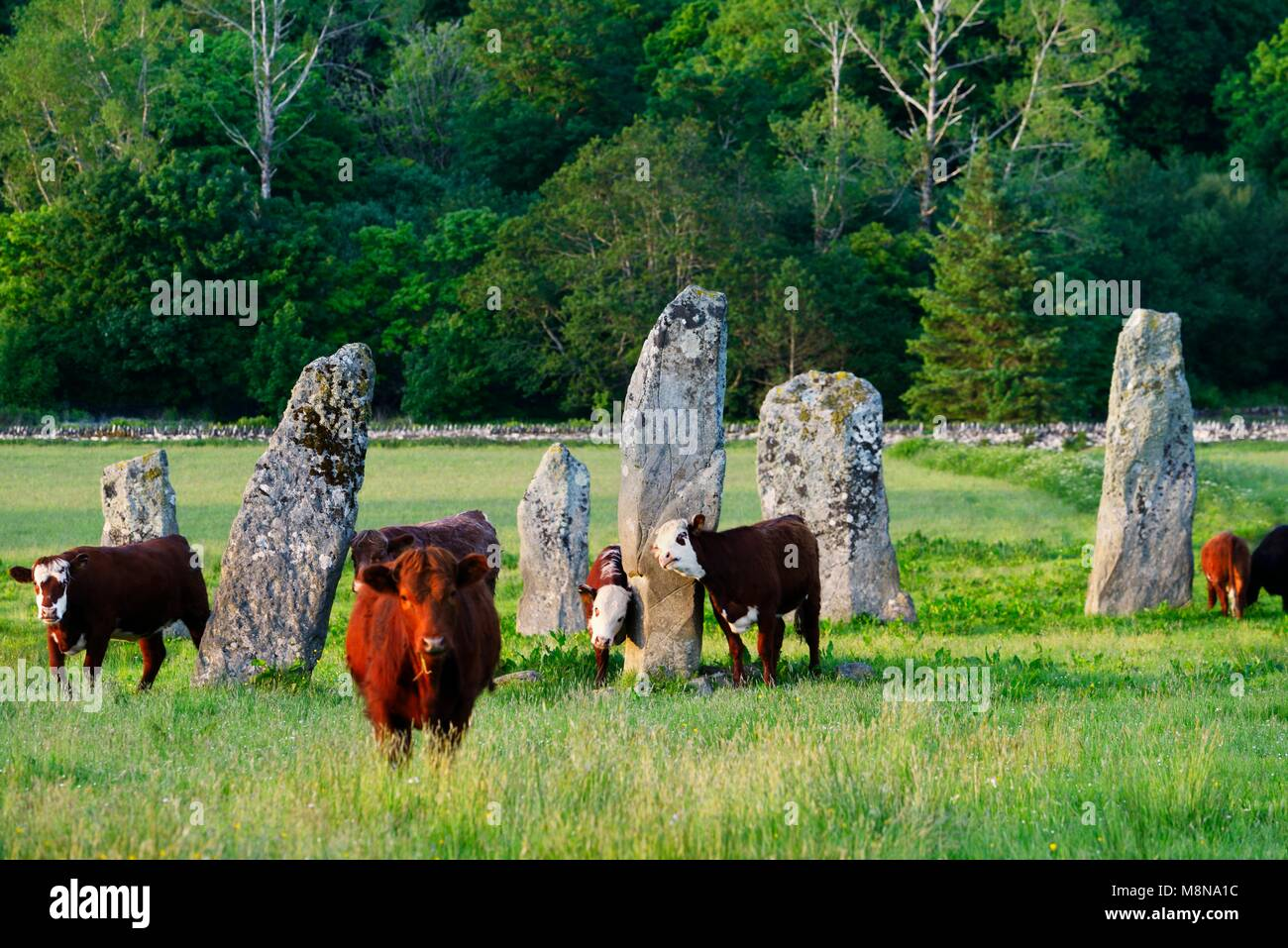 Ballymeanoch prehistoric Neolithic standing stones stone alignment seen from the southwest. Kilmartin Valley, Argyll, - Stock Image