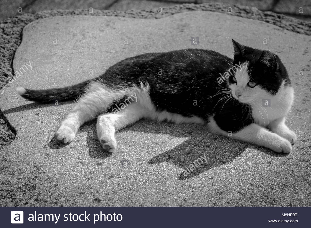 Cute black and white spotted kitten in garden monochrome image