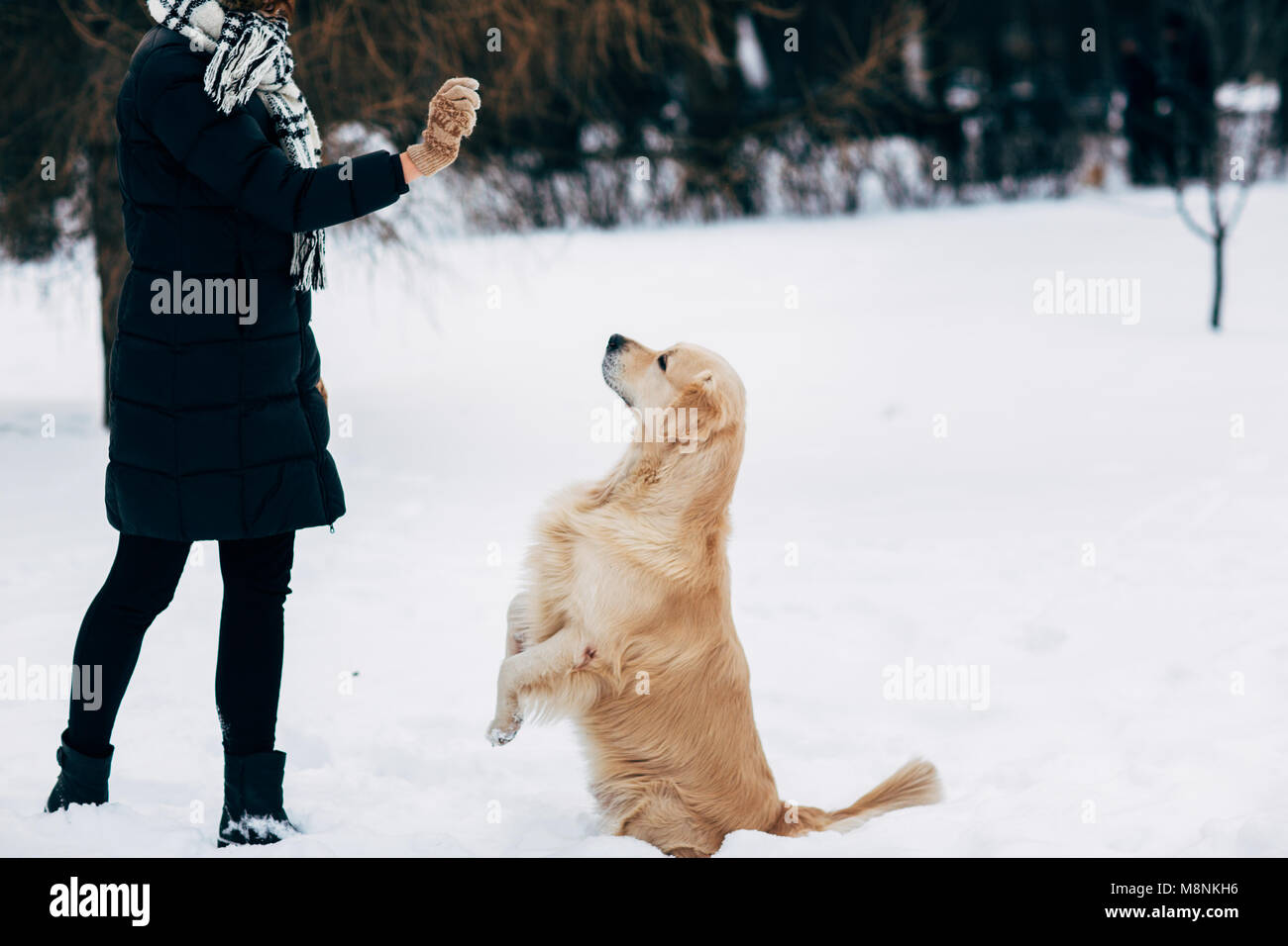 Picture of girl with labrador on walk in winter park Stock Photo