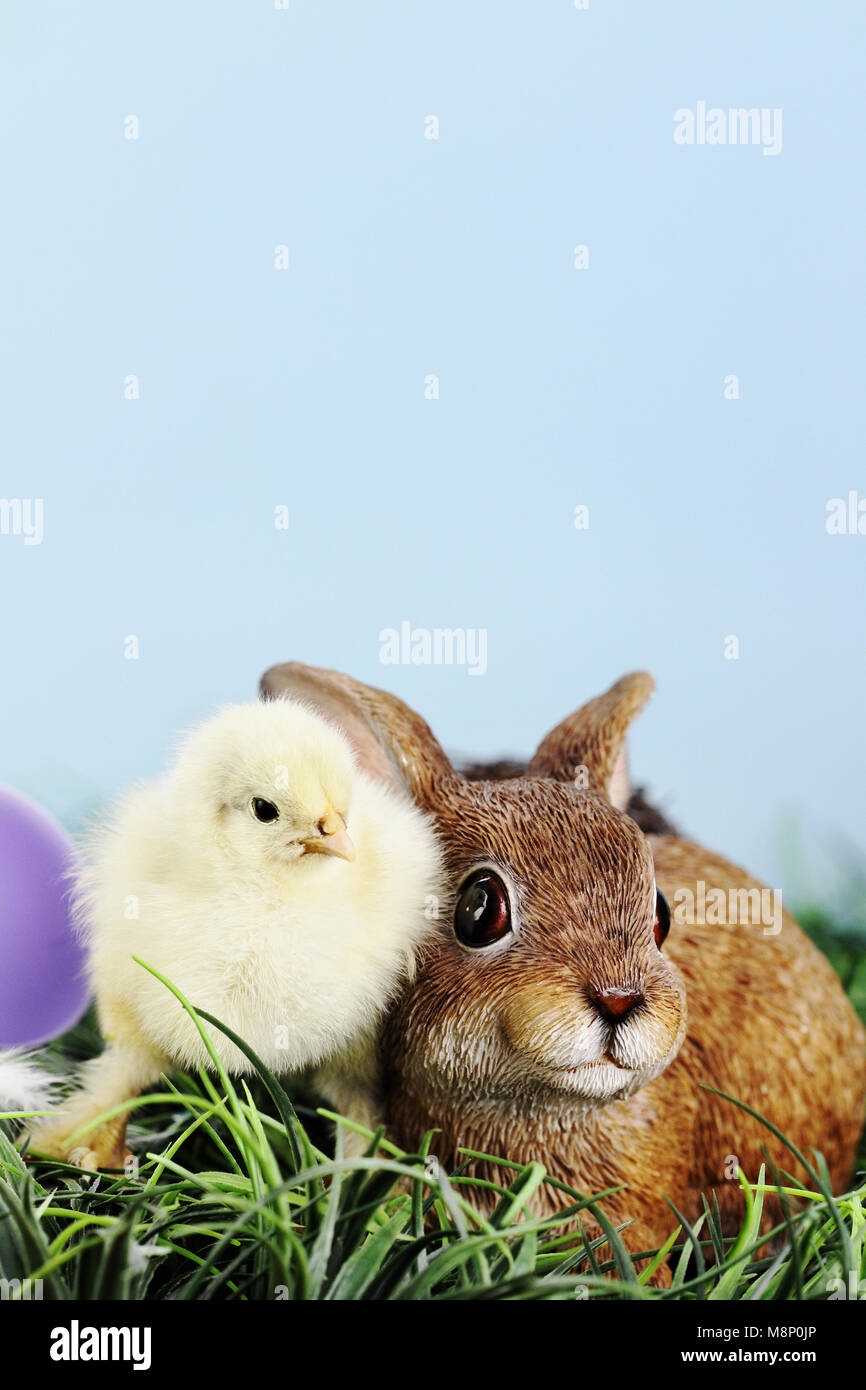 Little white and yellow Easter chick standing by and adorable resin brown bunny rabbit. Extreme shallow depth of - Stock Image