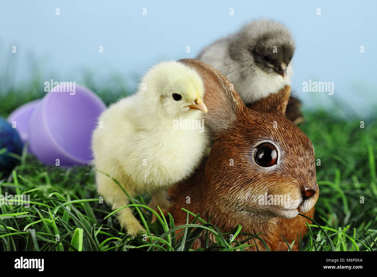 Little white and yellow Easter chick standing by and adorable resin brown bunny rabbit with a grey chick sleeping - Stock Image