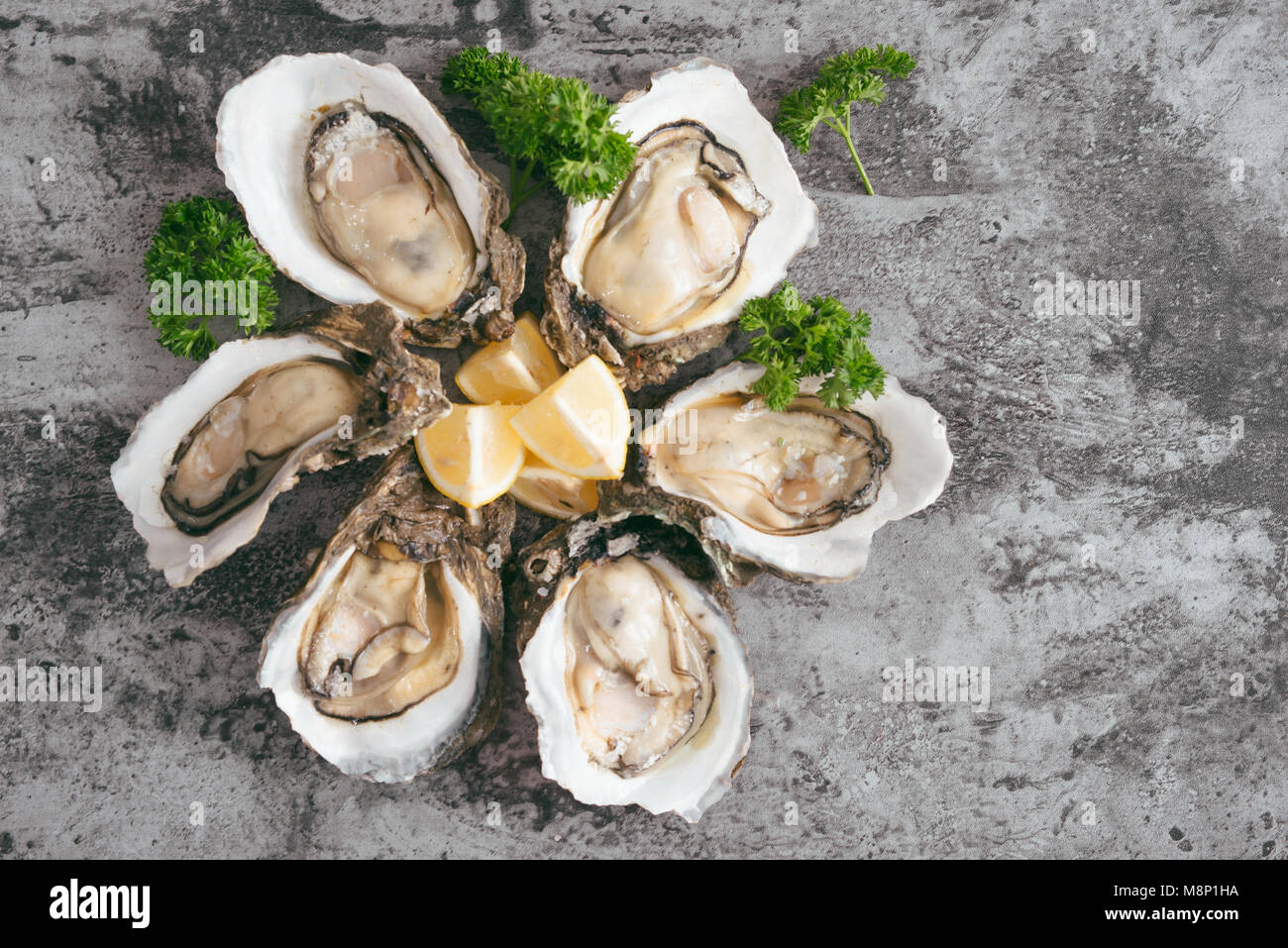 Opened oysters, lemon on gray stone table. Half dozen. With copy space - Stock Image