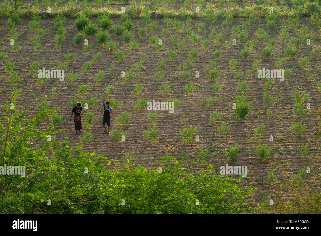 A couple of Burmese boys, teenagers, youths walking on the soil of a ploughed field, with shrubs growing, in a rural - Stock Image