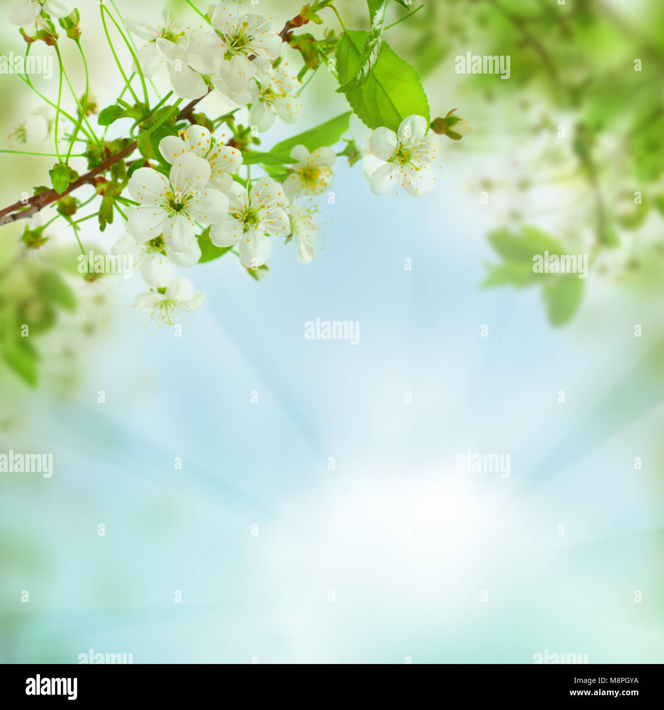 Spring floral background - abstract nature concept with blue sky, leaves and flowers Stock Photo