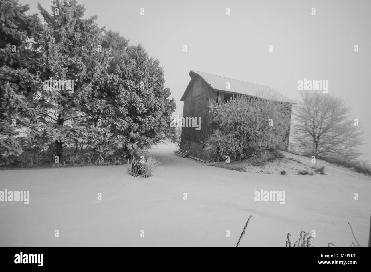 Old Barn In Frost And Snow Black White