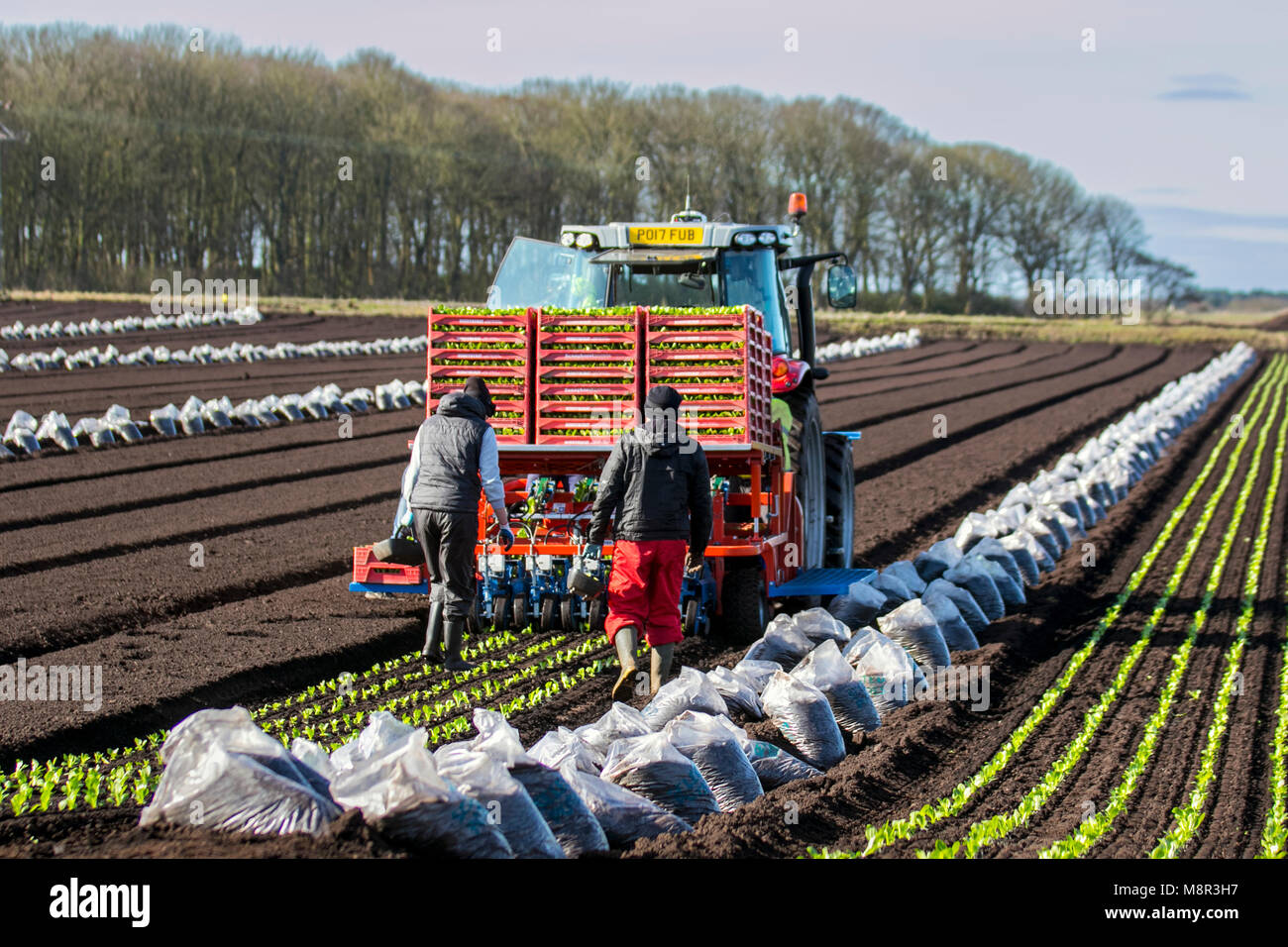 Tarleton, Lancashire, UK.  UK Weather.   20th March, 2018. EU Nationals reassured now that the UK has reached an - Stock Image