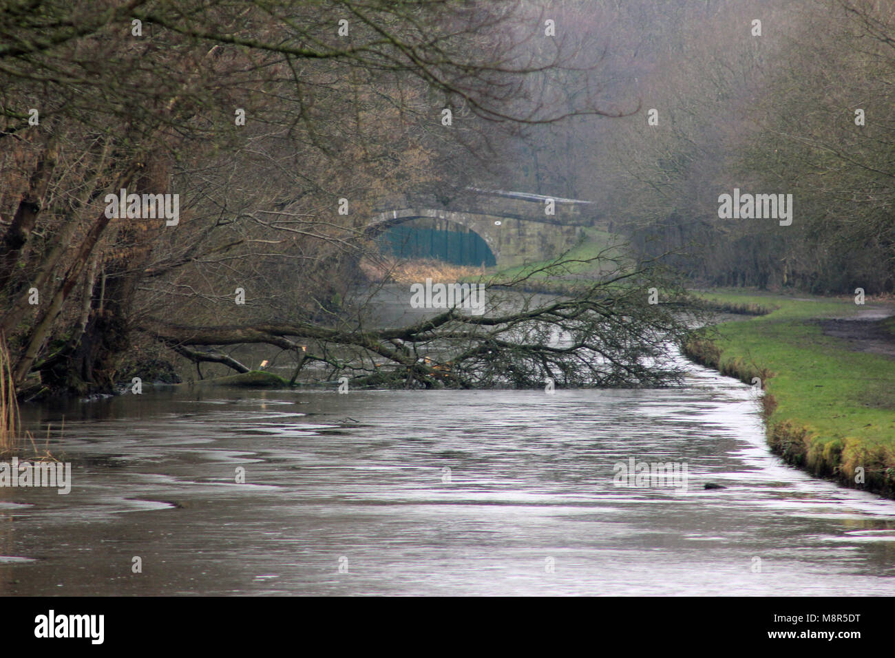 A fallen tree lies across the icy waters of the Leeds and Liverpool canal in the Douglas valley in West Lancashire - Stock Image