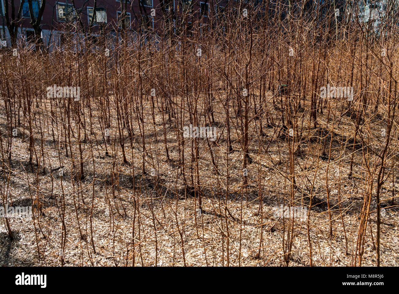 'Lost Man Creek' by the artist Spencer Finch at the Metrotech Center in Brooklyn in New York on closing - Stock Image