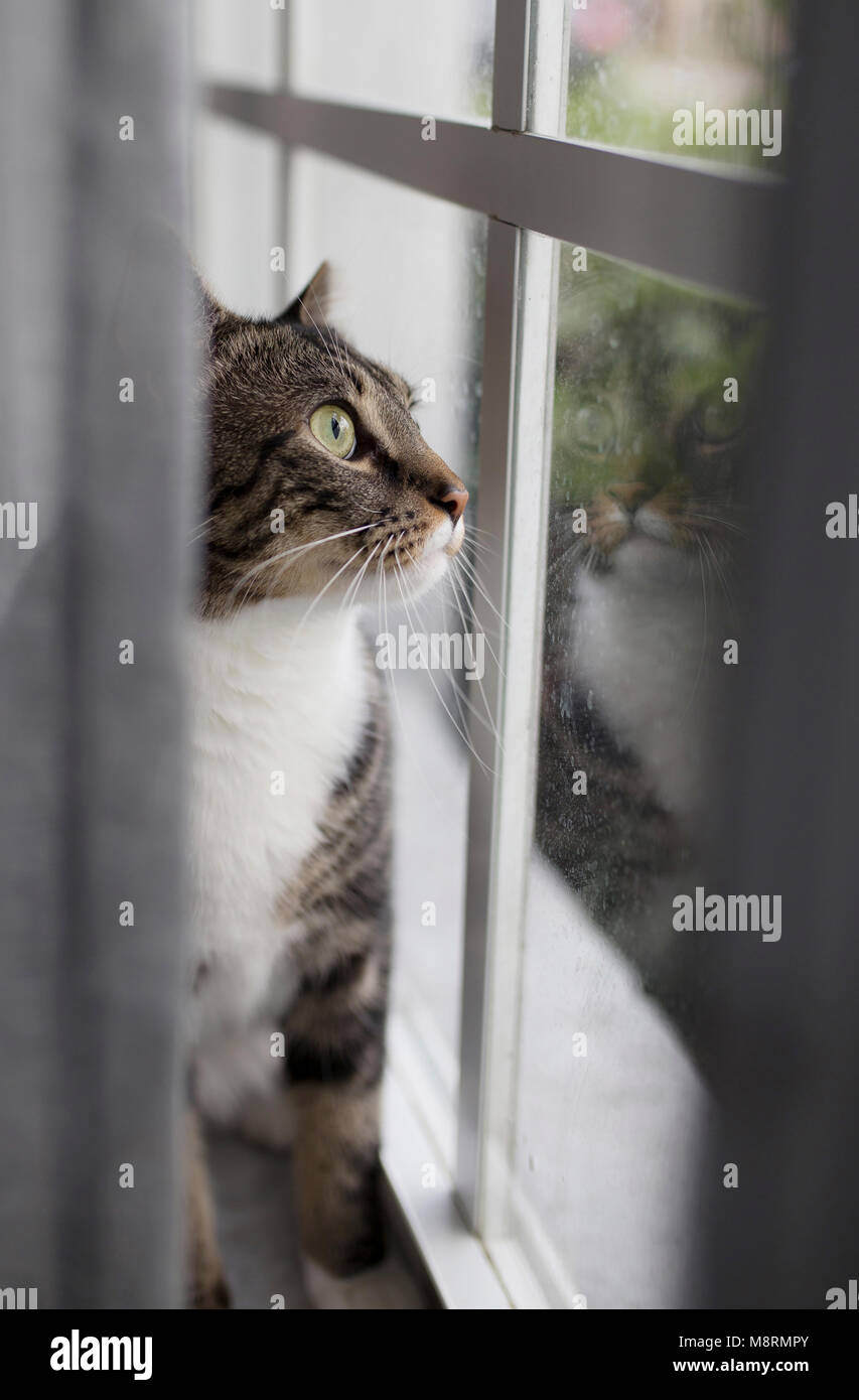 Close-up of cat looking through window at home - Stock Image
