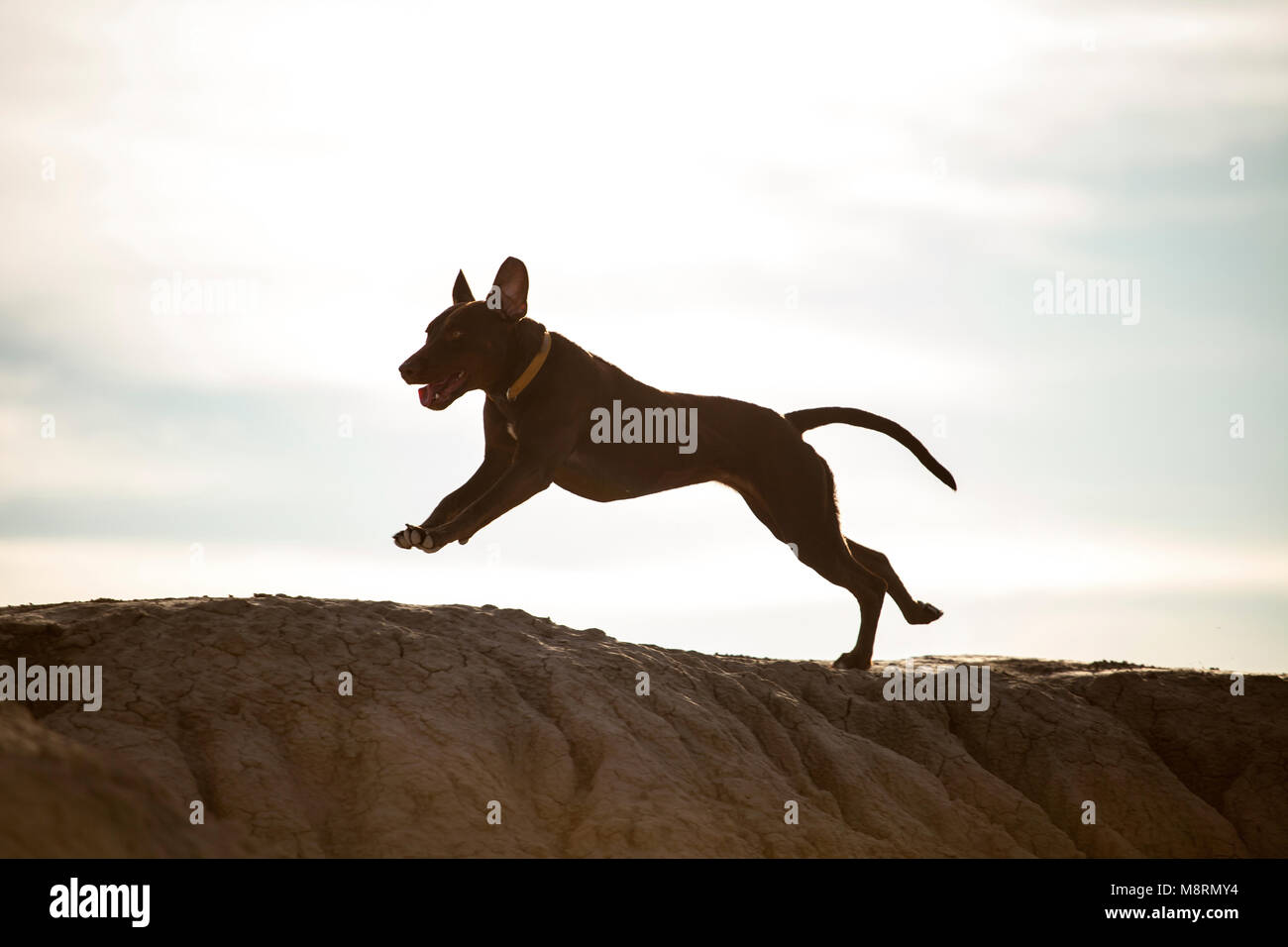 Dog running on rock against sky during sunny day - Stock Image