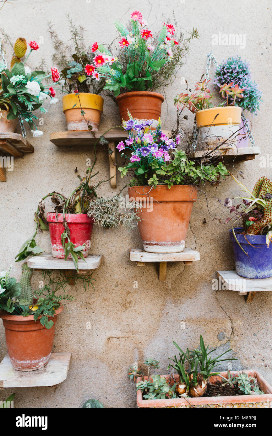 Potted plants on shelves by wall - Stock Image
