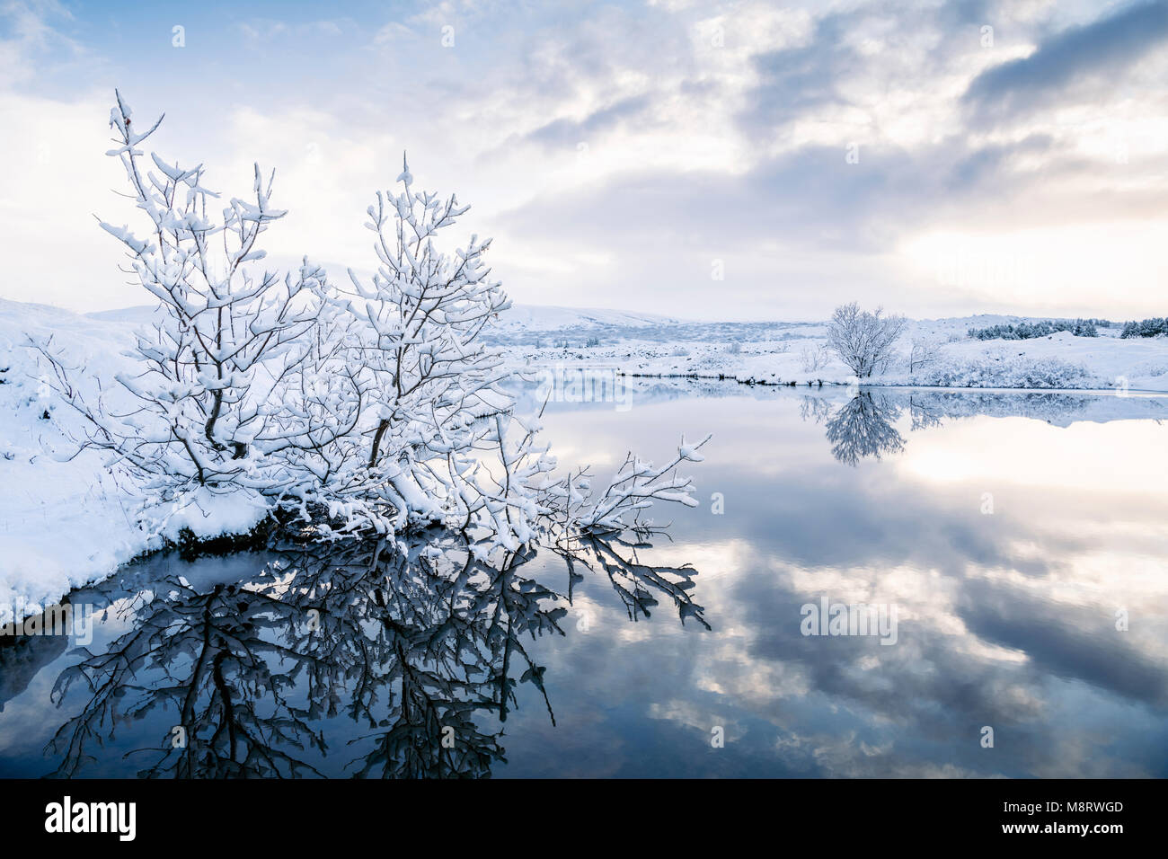 Snow covered dried plants by lake against cloudy sky - Stock Image
