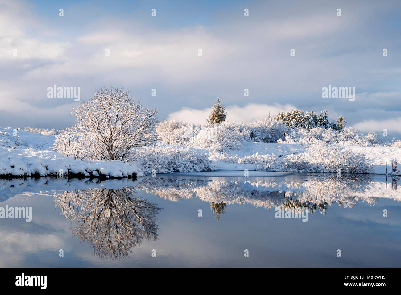 Idyllic view of snow covered dried plants by lake against cloudy sky - Stock Image