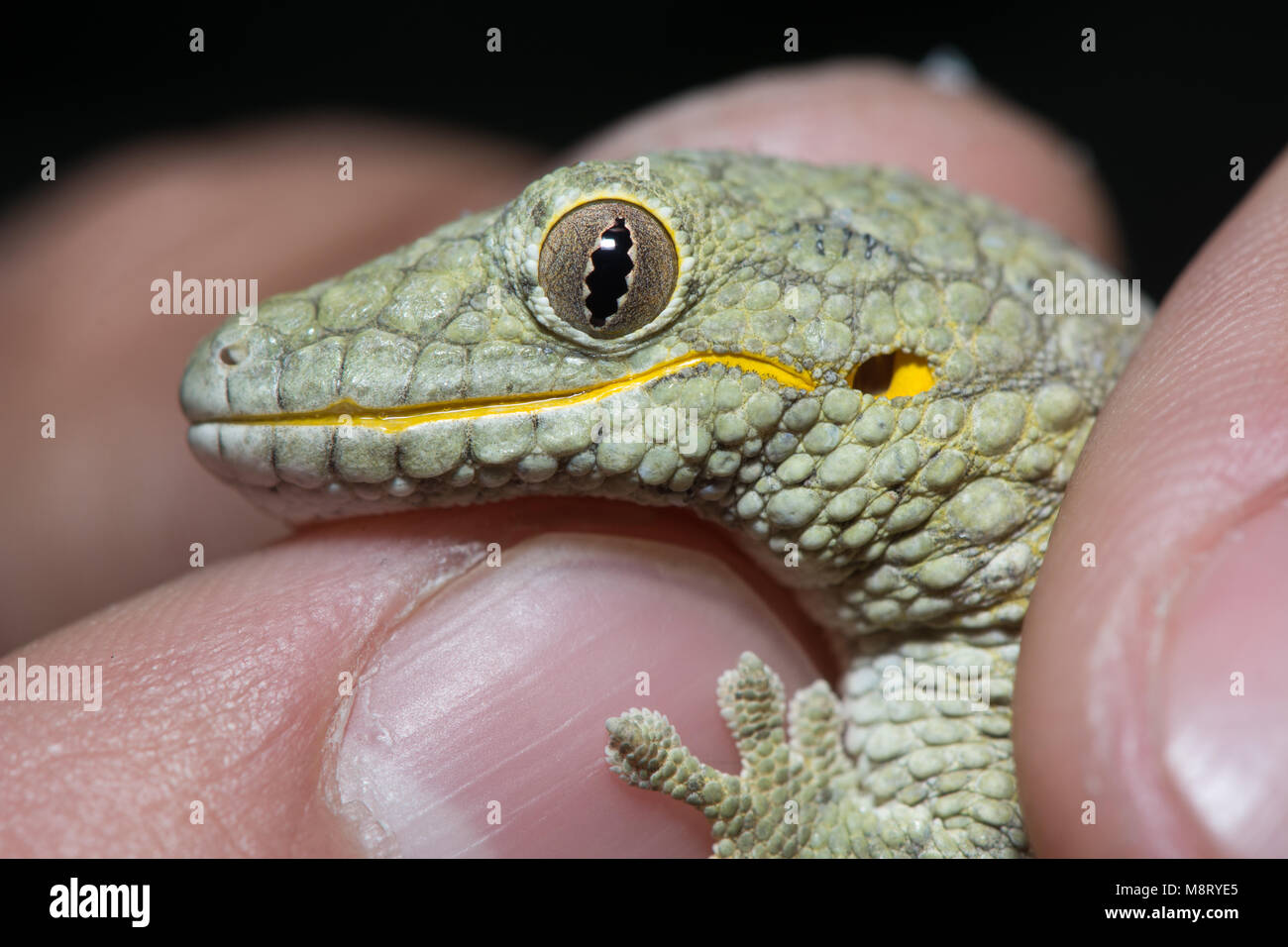Speed dating hamburg gecko