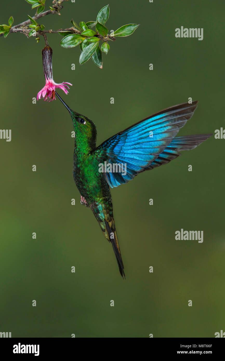 Bird image made by Dubi Shapiro - Stock Image