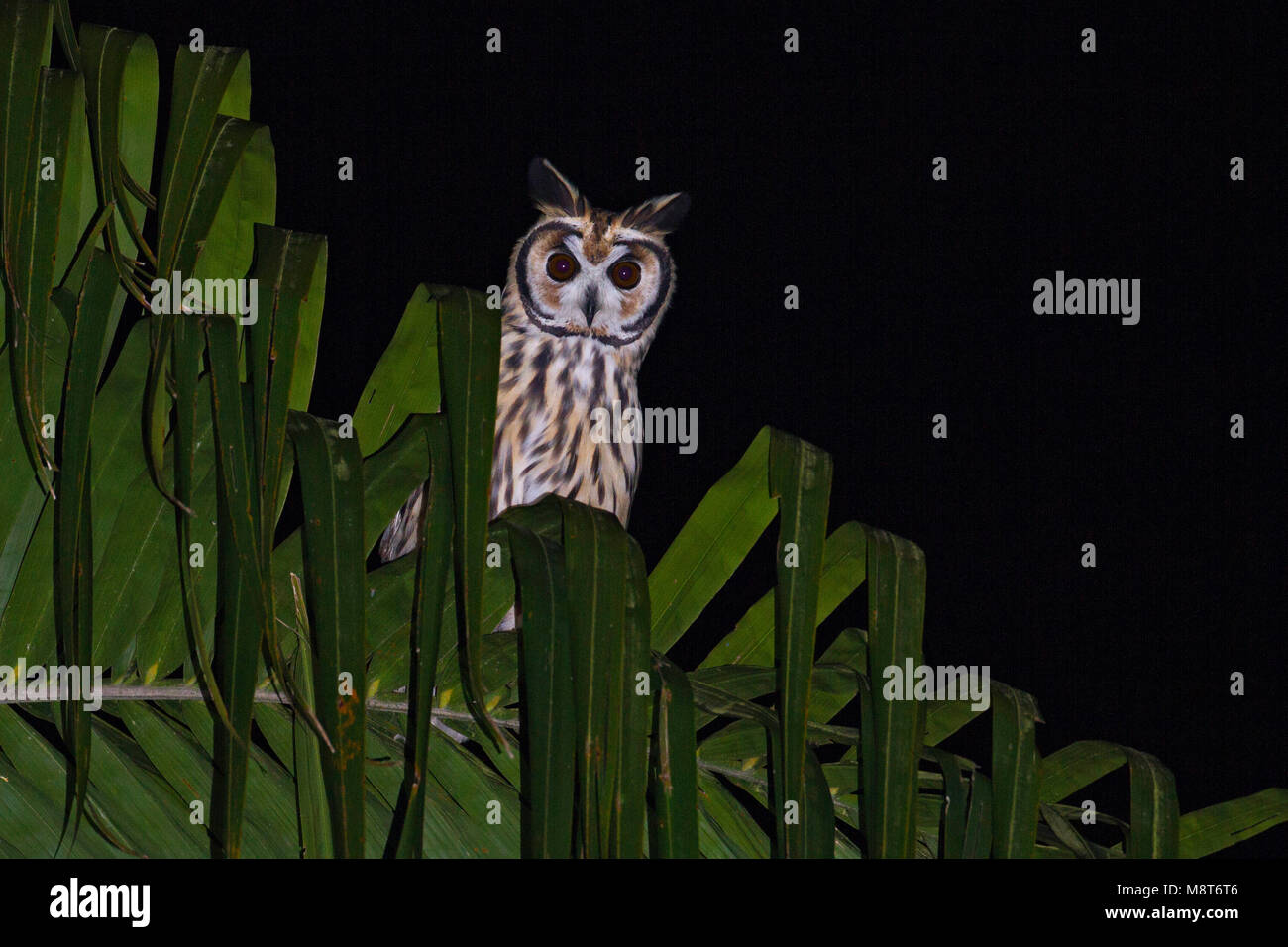 bird photo made by dubi shapiro stock photo 177553158 alamy