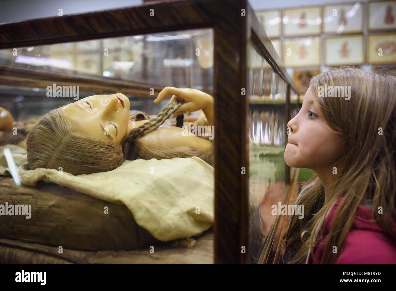 Florence. Italy. Child (7yrs old) looking at one of the 18th century wax anatomical models on display at La Specola, - Stock Image