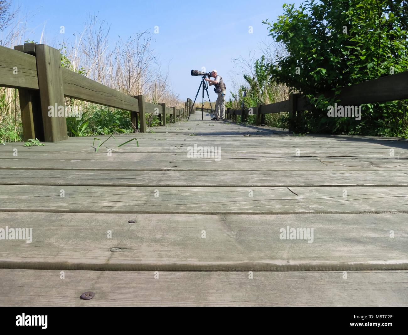 Mannelijke fotograaf met telelens staand op houten wandelpad; Male photographer with zoom lens standing on boardwalk Stock Photo