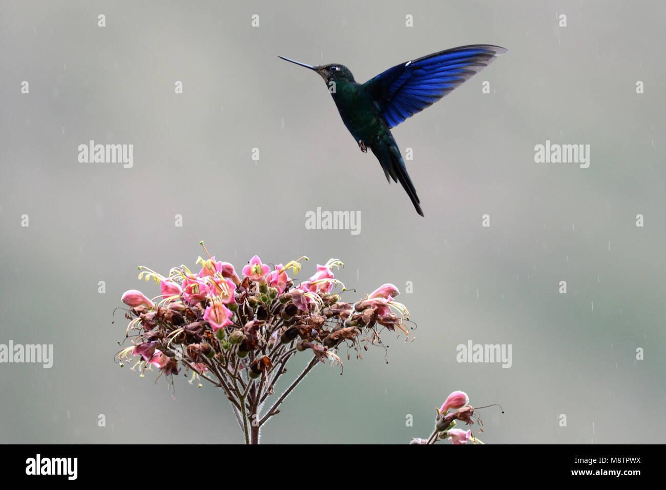 Bird image by Laurens Steijn - Stock Image