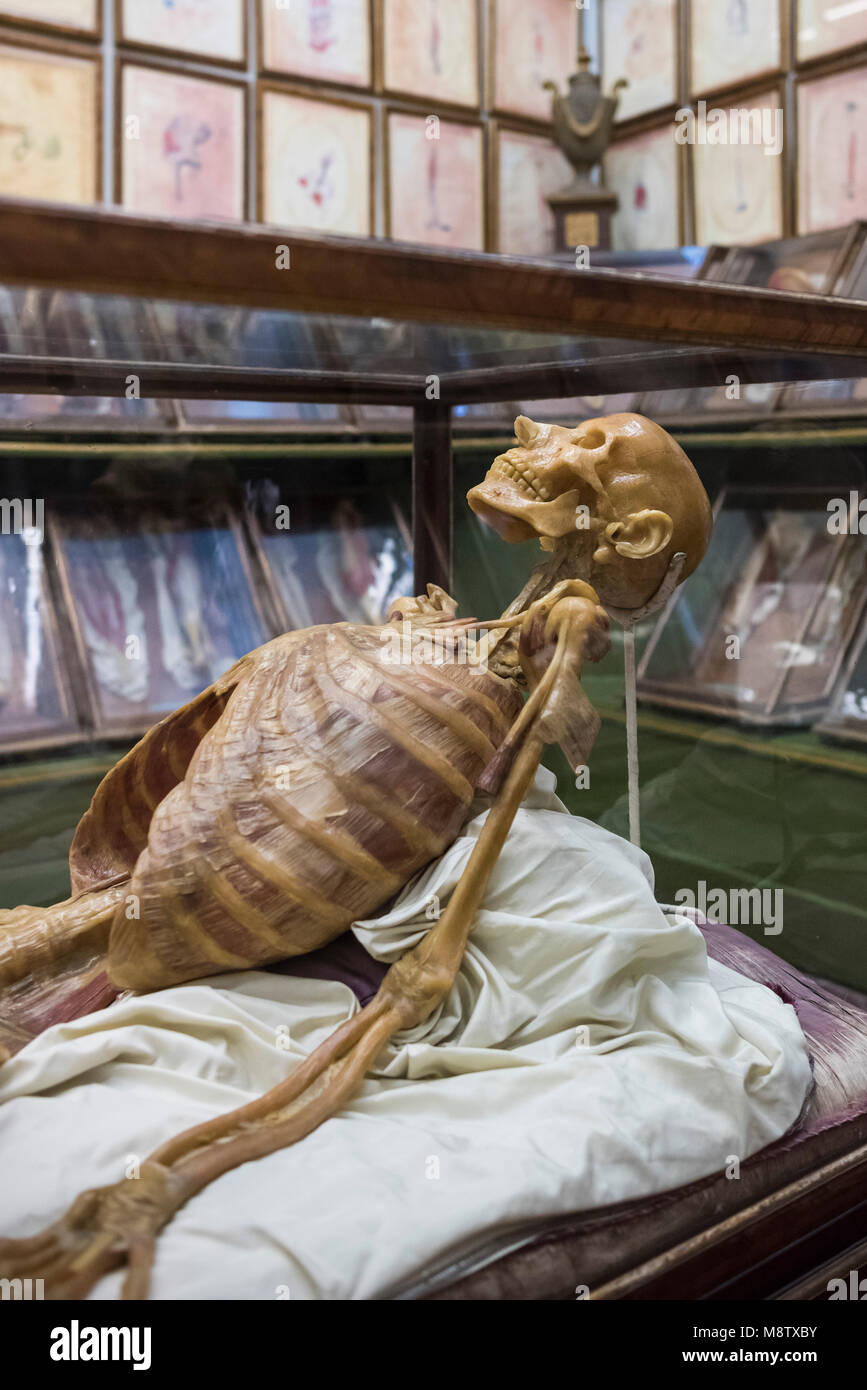 Florence. Italy. Collection of 18th century wax anatomical models at La Specola, Museum of Zoology and Natural History. - Stock Image