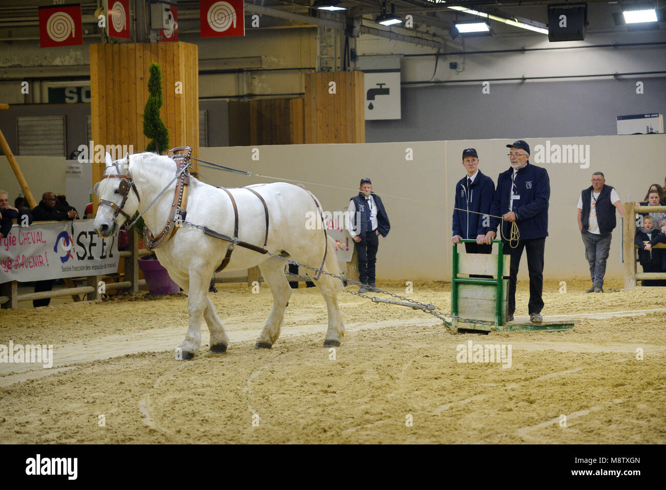 Exhibition or Demonstration of a Boulonnais Draft Horse Pulling Sledge at the Paris International Agricultural Show - Stock Image