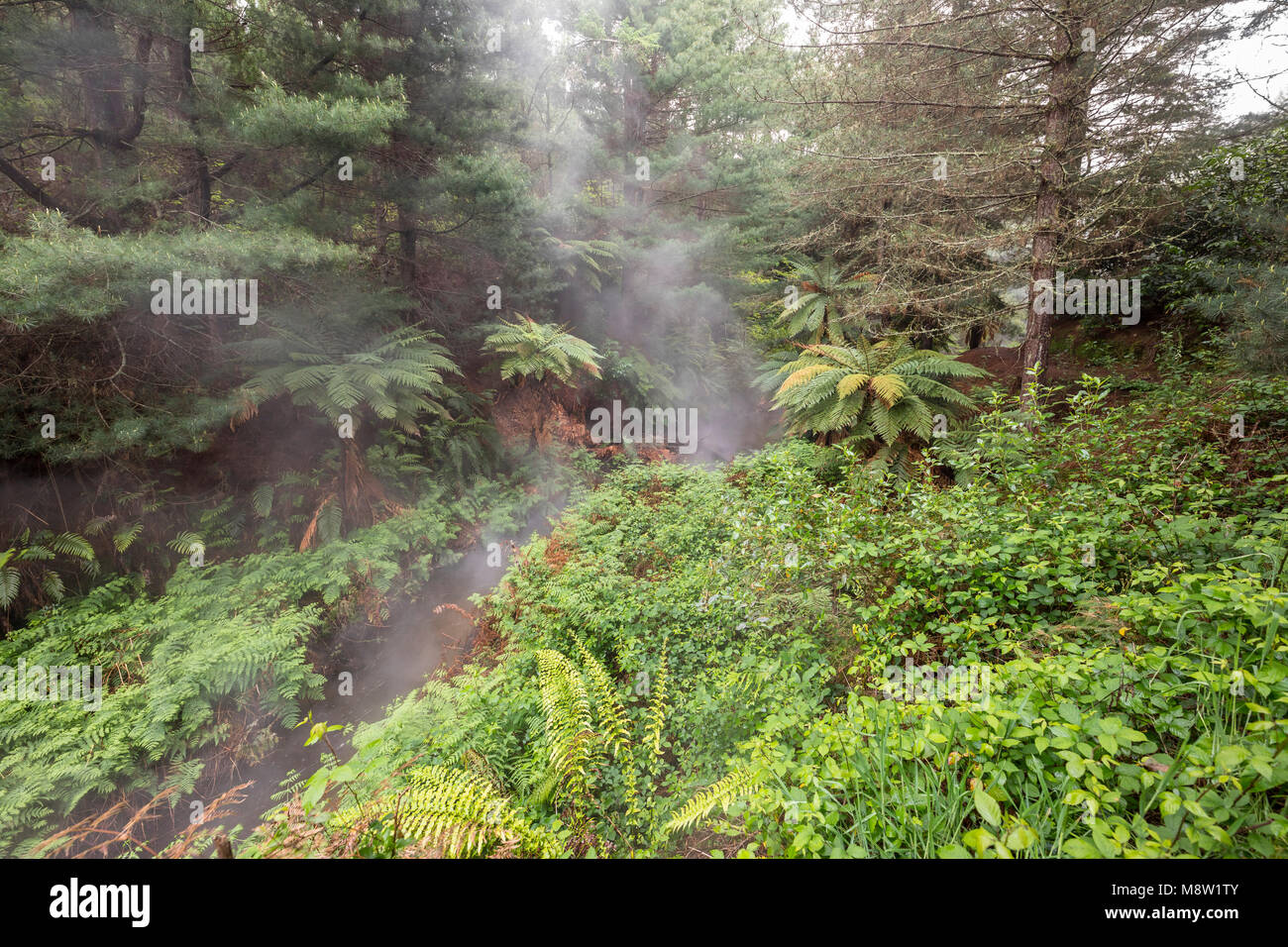 Kerosene Creek, Rororua, New Zealand - Stock Image