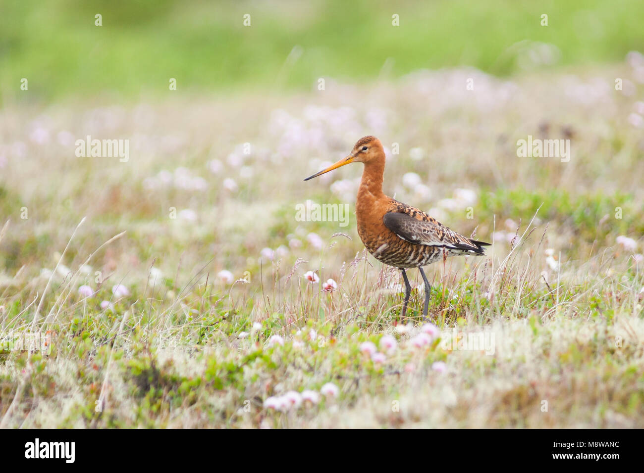 Bird image made by Ralph Martin Stock Photo