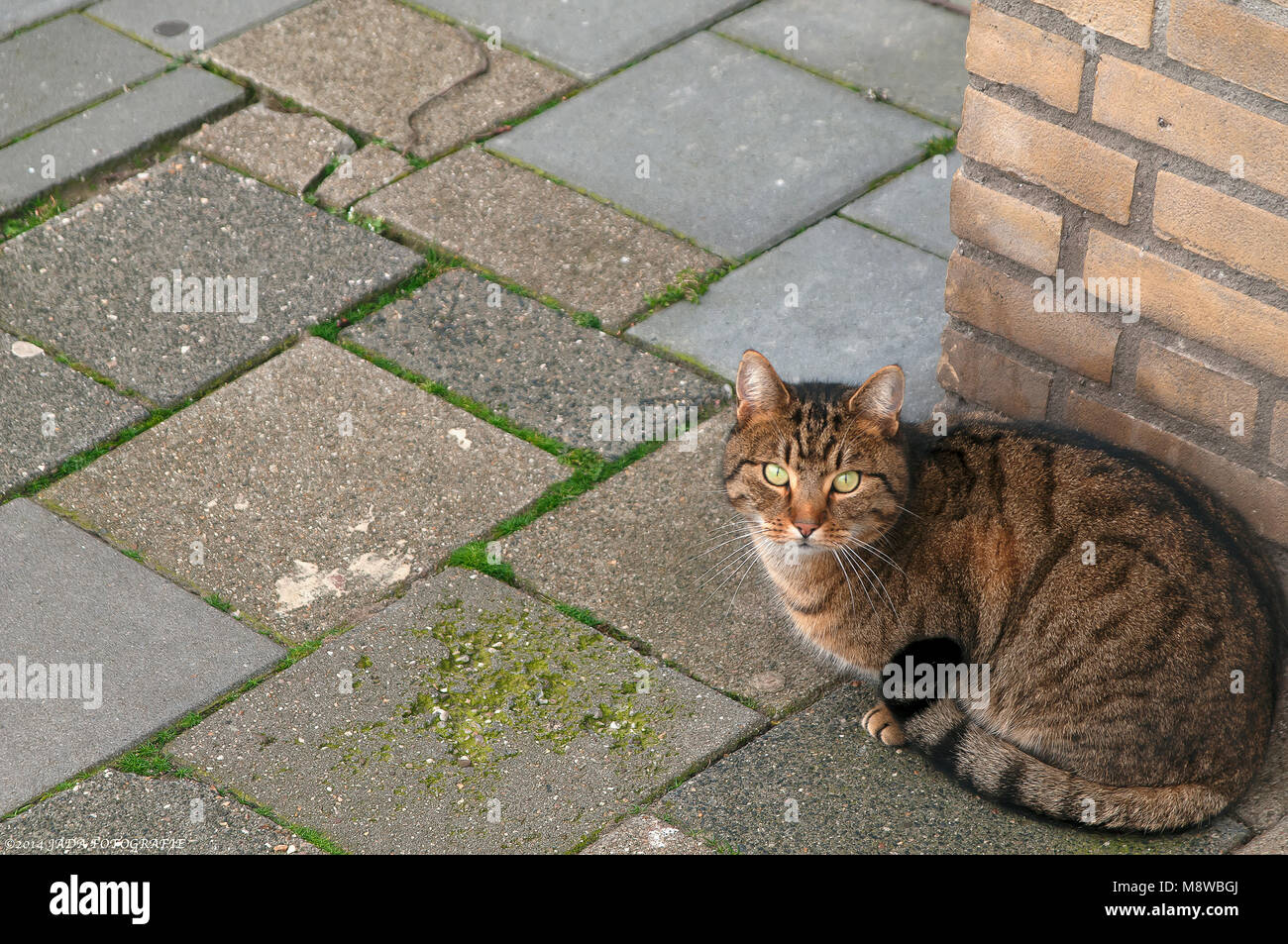 sweet cat sitting on the corner of a street - Stock Image