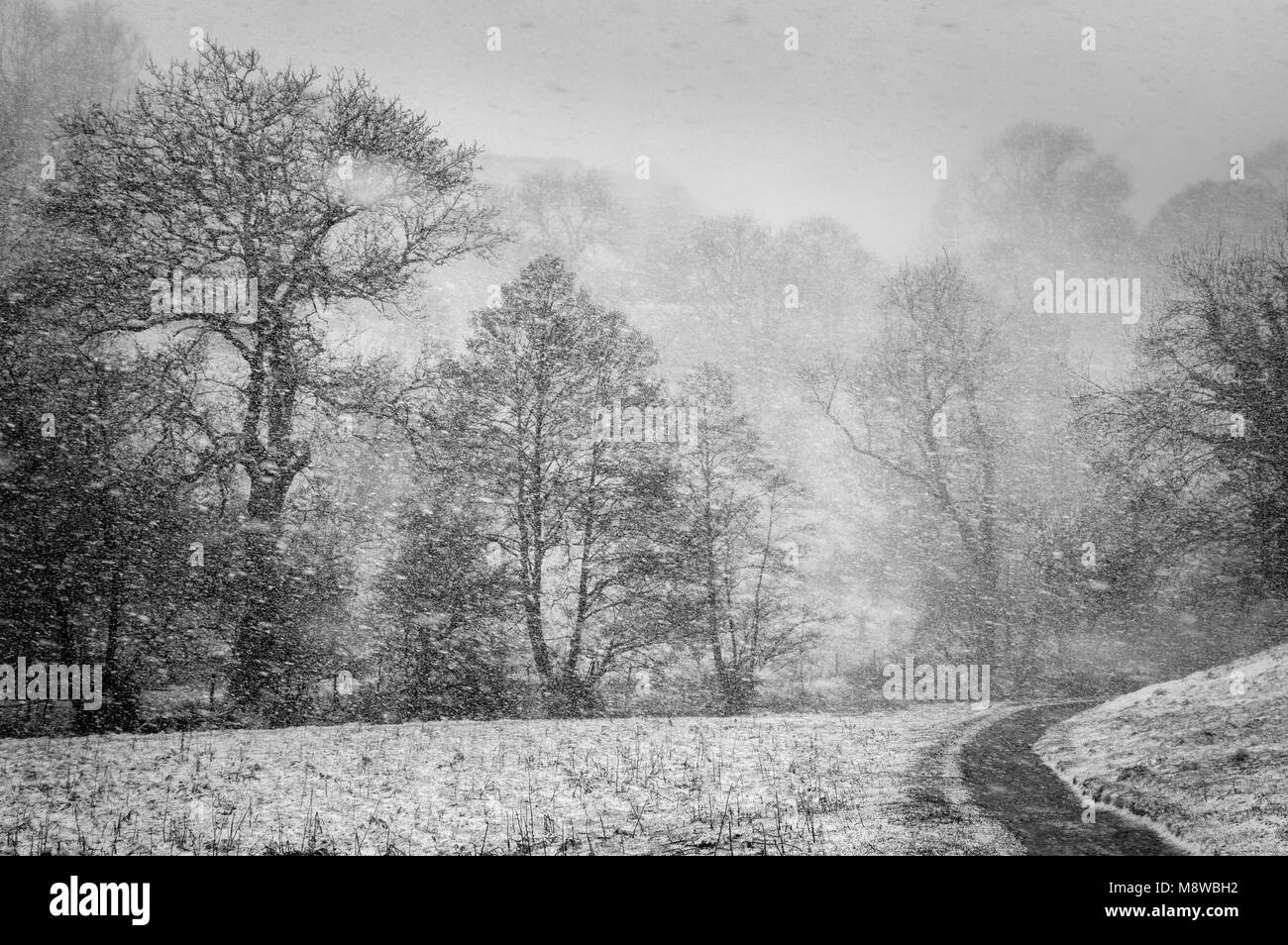 Blizzard near Milldale, Dove Valley, Peak District National Park, Derbyshire Stock Photo