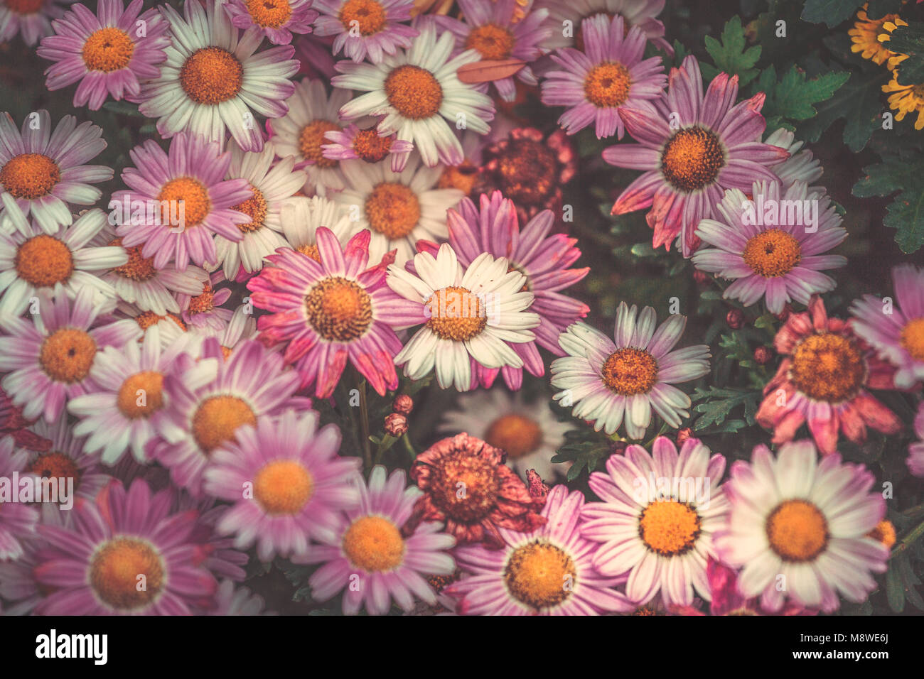 Fresh Colorful Flower Wall Background Stock Photo Alamy