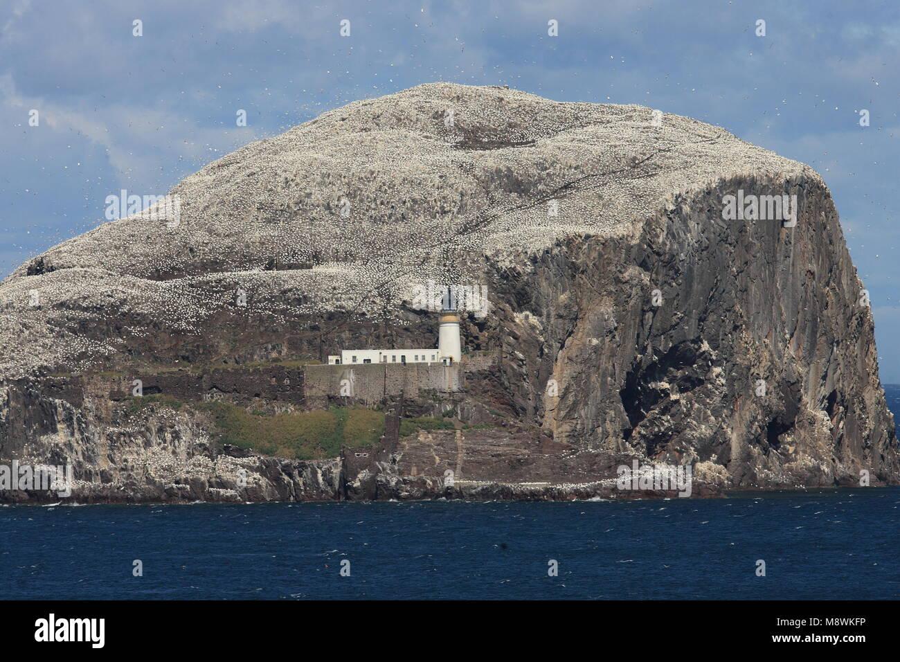 Zicht op Bass Rock; View on Bass Rock - Stock Image