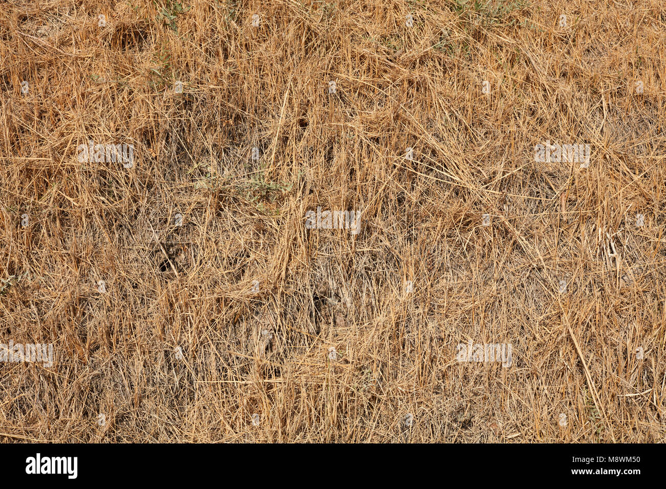 grass field from above. Dried Beige Grass Texture Background In Summer From Above - Stock Image Field Y