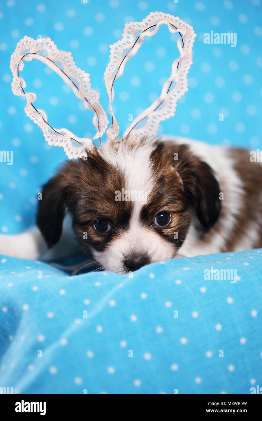 puppy with rabbit ears - Stock Image