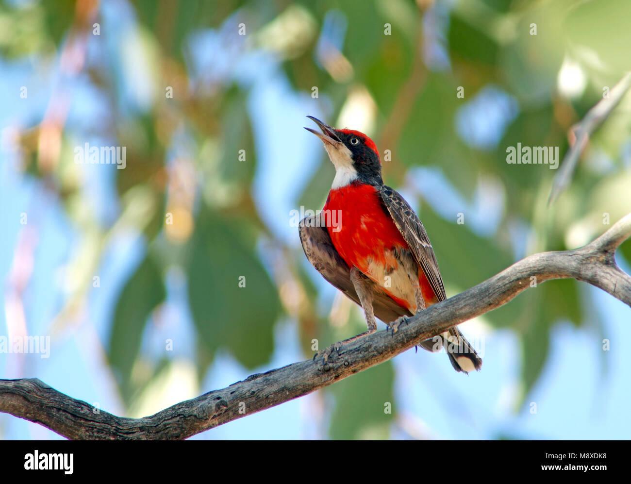 Bird image made by Pete Morris - Stock Image