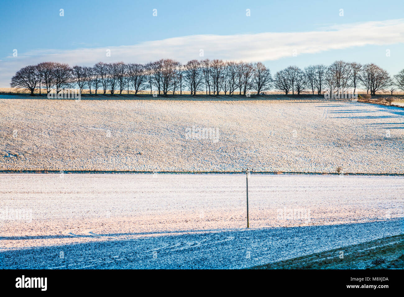 A frosty winter's morning on the Marlborough Downs. - Stock Image