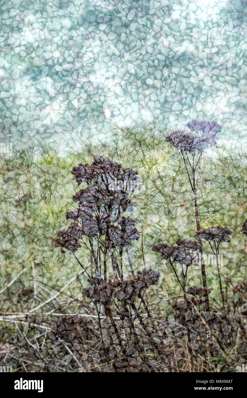 Multiple exposure of dead plants, trees and gravel. - Stock Image