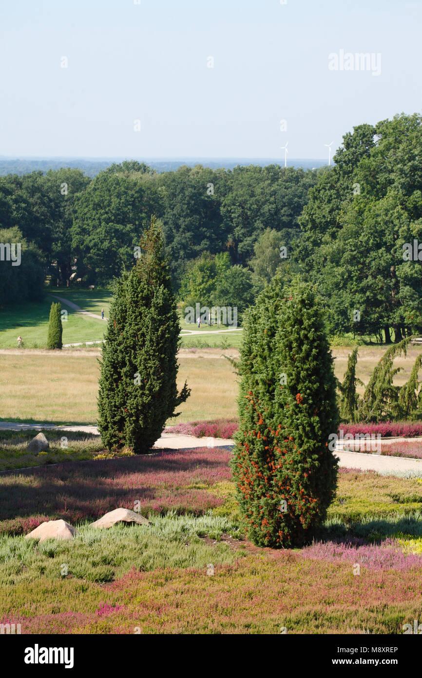 The heather garden with flowering heather, Schneverdingen, Lüneburg Heath, Lower Saxony, Germany, Europe  I  Der Heidegarten mit blühender Heide,  Sch Stock Photo