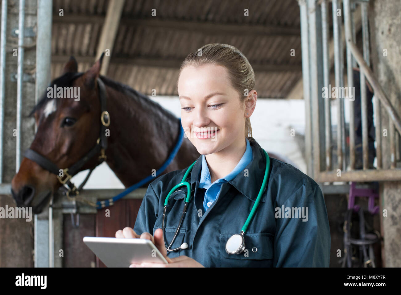Female Vet With Digital Tablet Examining Horse In Stable - Stock Image