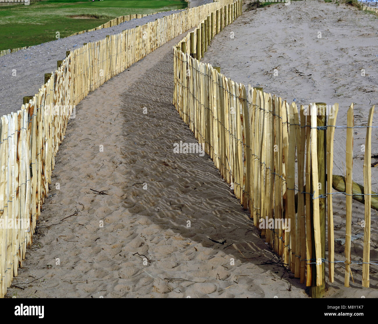 Fencing on sand dunes at Dawlish Warren nature reserve. - Stock Image