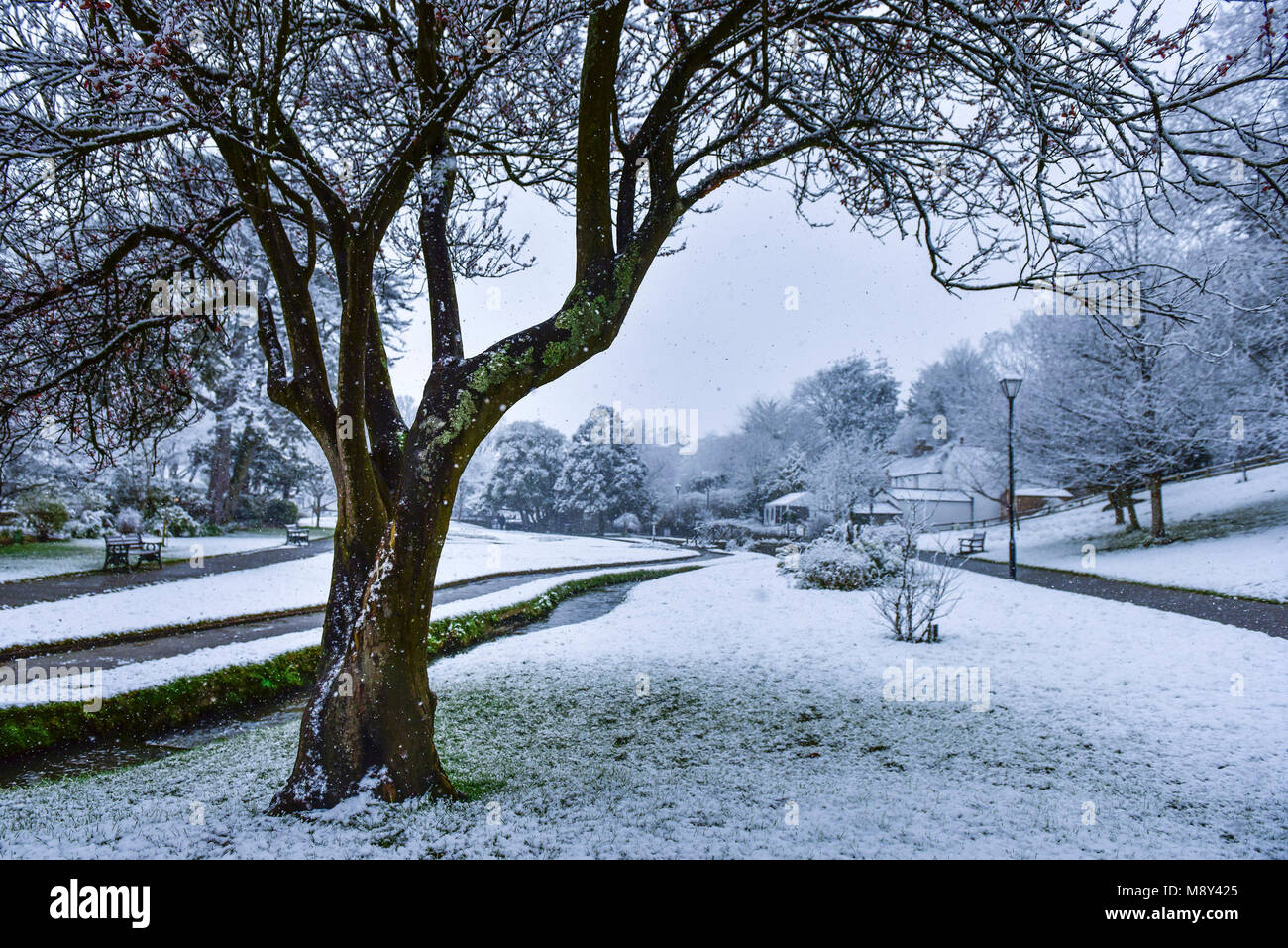 Heavy snowfall in Trenance Gardens Newquay Cornwall. - Stock Image