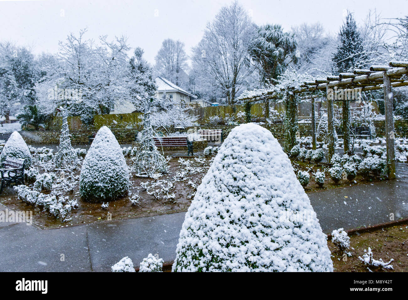 Snow falling over plants in the historic Trenance gardens in Newquay Cornwall. - Stock Image