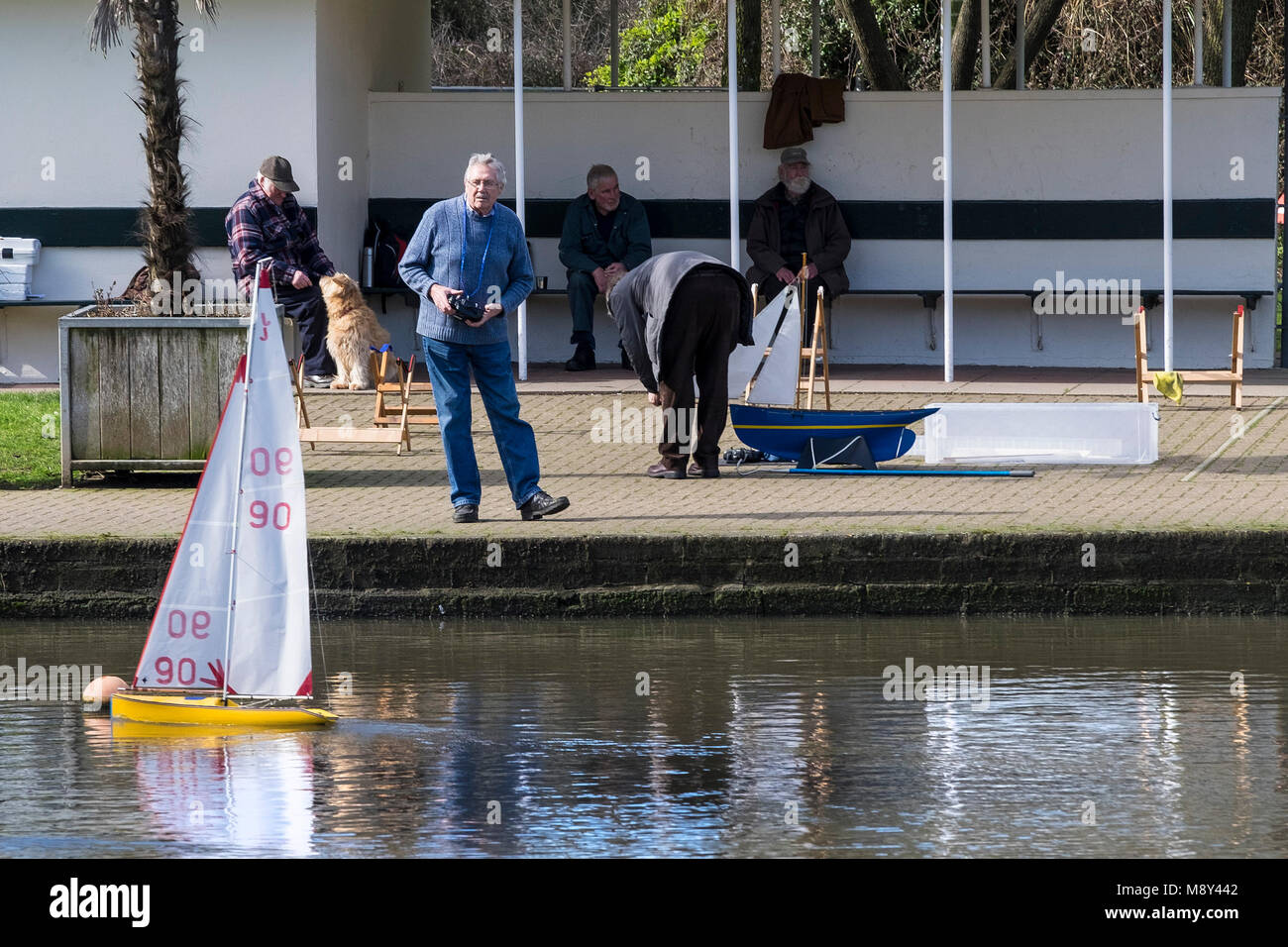 A member of the Newquay Model Yacht Club at Trenance Boating Lake controlling his model racing yacht Newquay Cornwall. - Stock Image