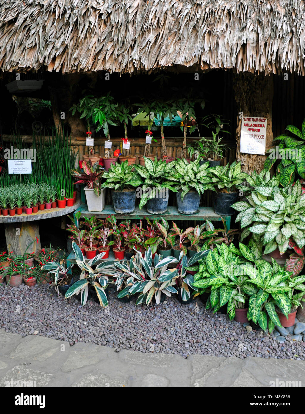 Plants For Sale In A Garden And Plant Centre Near Vigan In Luzon Stock Photo Alamy