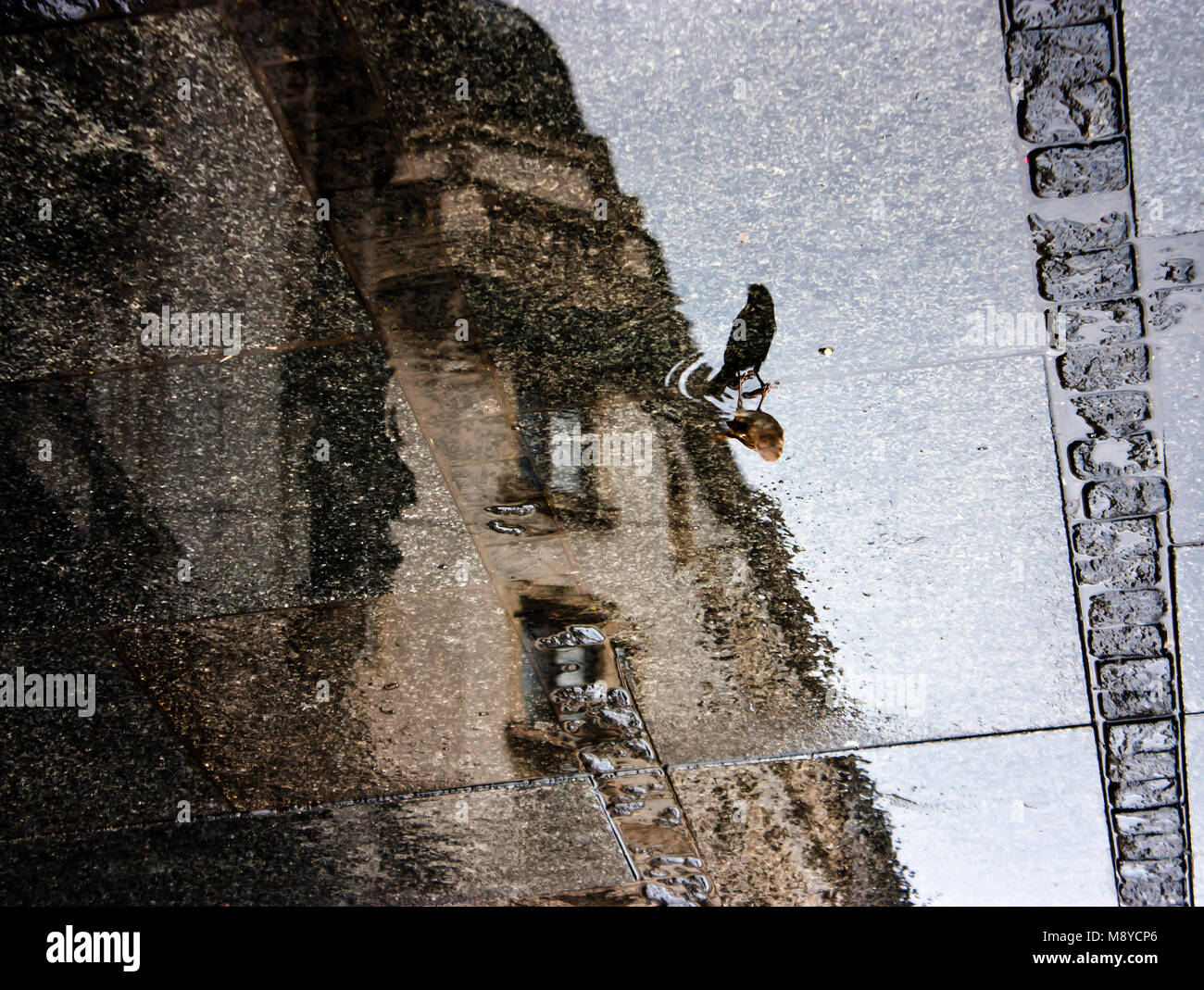 Blurry reflection shadow of a sparrow and a city on a rainy day sidewalk Stock Photo