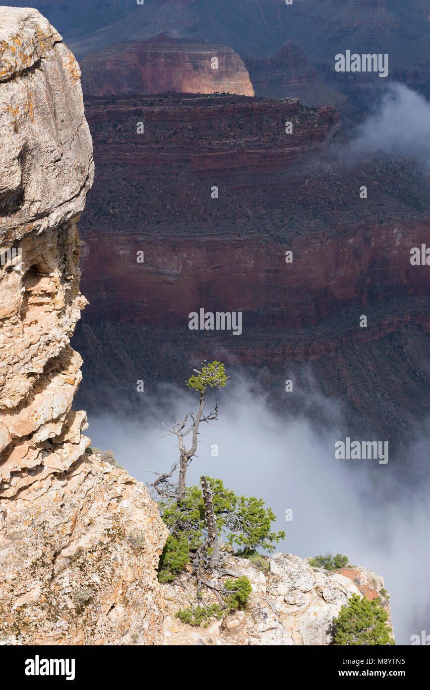 Rising mist, Yavapai Point, Grand Canyon NP, AZ, USA, Mid-September, by Dominique Braud/Dembinsky Photo Assoc - Stock Image