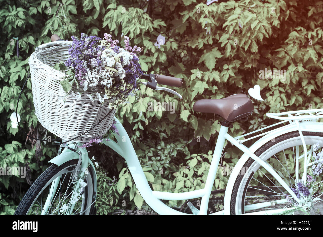 Bicycle with wicker basket of colorful dry flowers Limonium (Statice, sea-lavender, caspia or marsh-rosemary), pastel - Stock Image