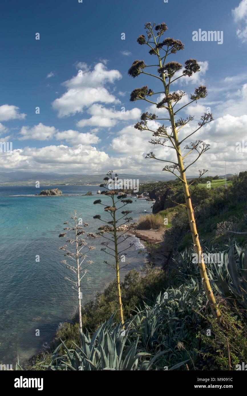View across Chrysochous Bay near Polis and the Akamas peninsula, Paphos district, Cyprus - Stock Image