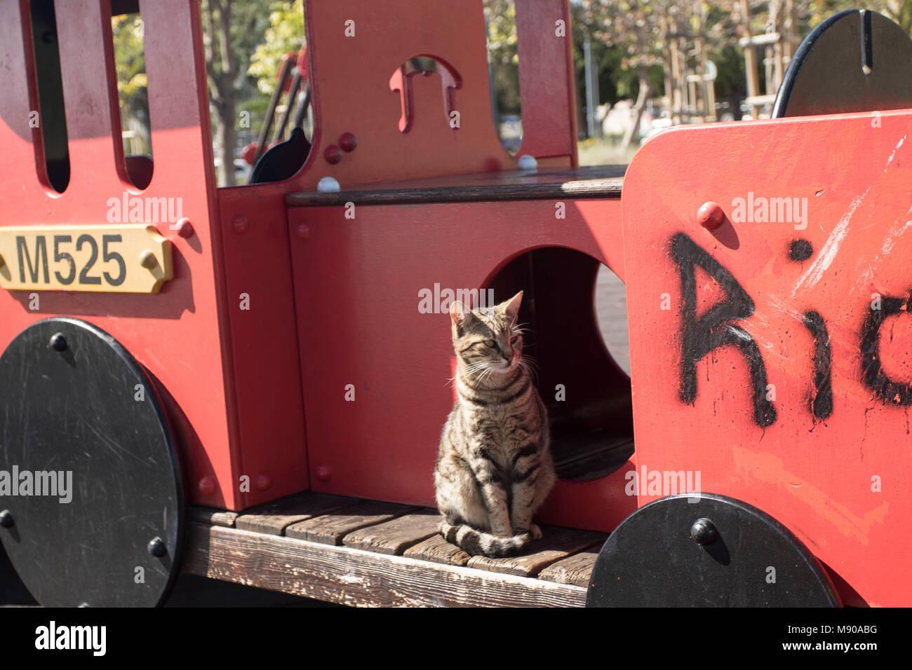 Cat on red playground train the limassol Municipal gardens in spring, Limmasol, Cyprus, Mediterranean - Stock Image
