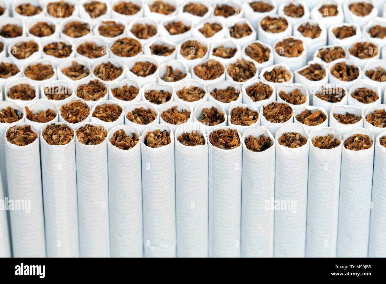 Background made from lot of cigarettes. Extreme closeup - Stock Image
